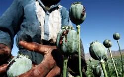Opium Derivatives Addiction