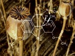 derivatives of opium